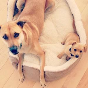 Lauren Conrad dogs