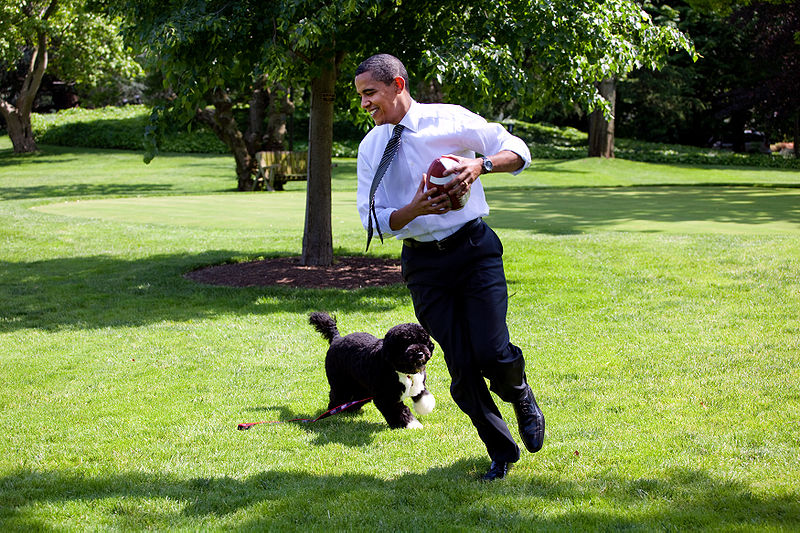 Bo Obama Barack Obama