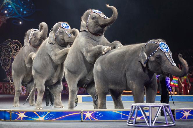 elephants1a